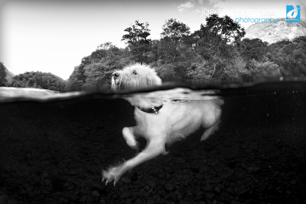 Dogs in Cumbria