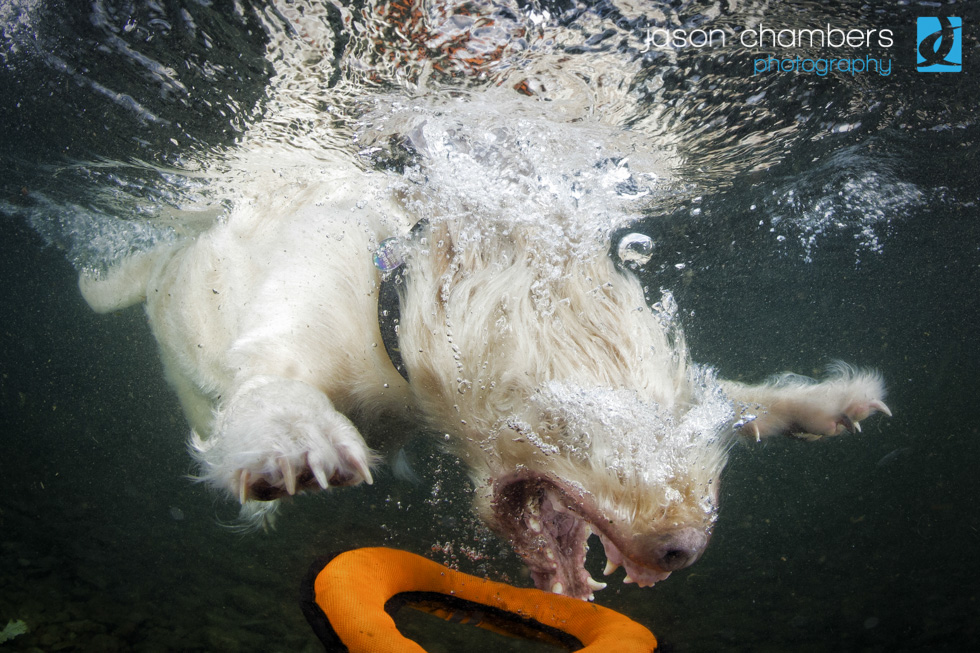 Dogs of the Lake District