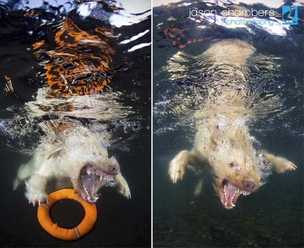 Underwater Dogs Cumbria