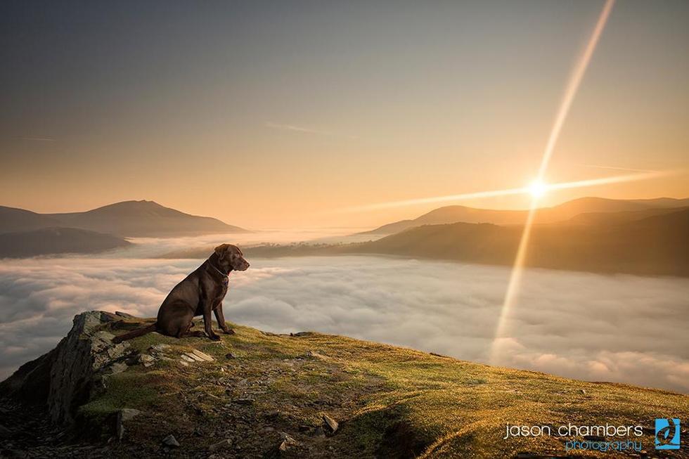 Lake District Dog Portraits