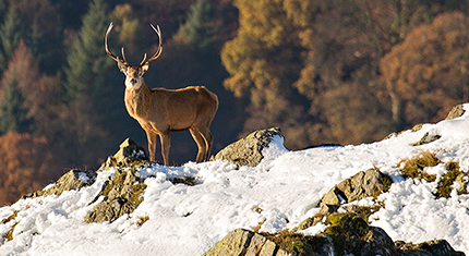 Martindale Deer Rut photographs