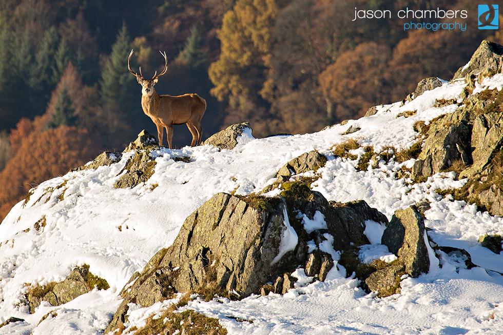 Martindale-Deer-Rut