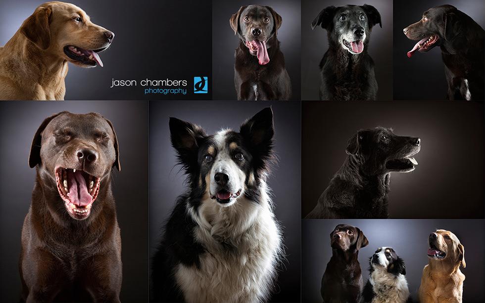Studio and underwater dog portraits
