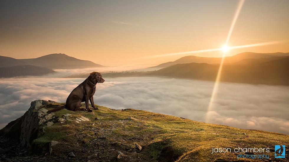 Dog Portraits in the Landscape
