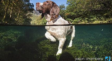 Lake District Portrait Underwater
